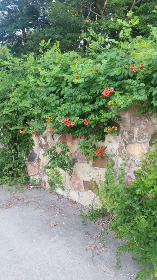 Kwiat ściana obraz stock