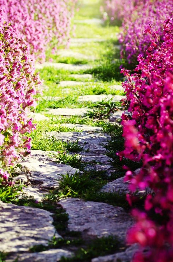 Kwiat ścieżka obraz royalty free