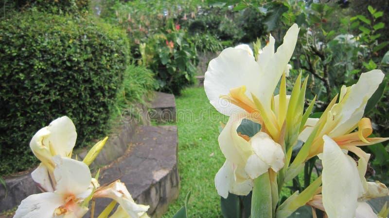 Kwiat światło obrazy stock