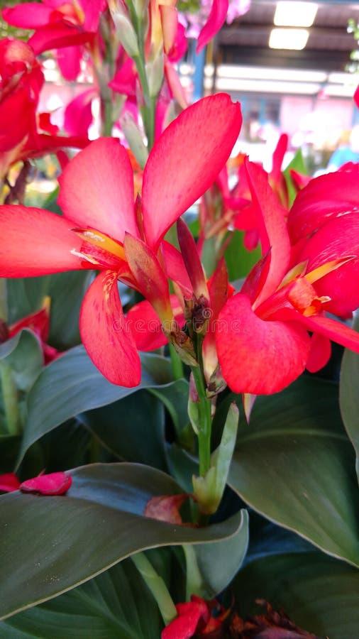 1 kwiat obraz stock
