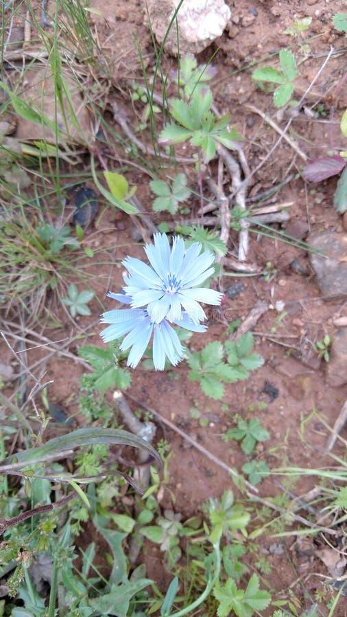 Kwiat 3 zdjęcie stock