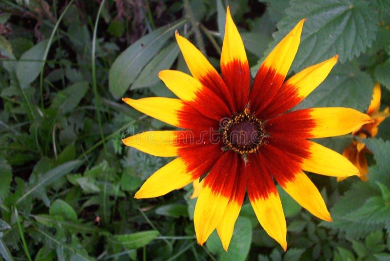 Download Kwiat obraz stock. Obraz złożonej z czerwień, fauny, kwiaty - 130531