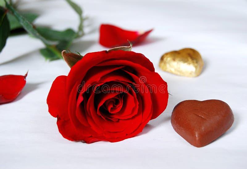 kwiat 4 rose obrazy stock