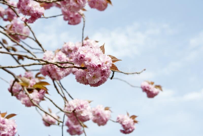 Download Kwiat zdjęcie stock. Obraz złożonej z target171, retro - 53782654