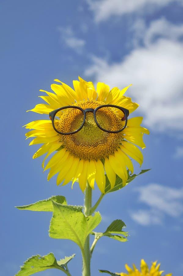 Download Kwiat obraz stock. Obraz złożonej z śliczny, słonecznik - 57670183
