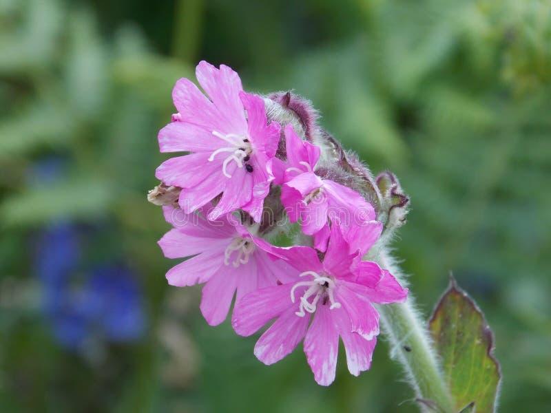 Kwiat? zdjęcia stock