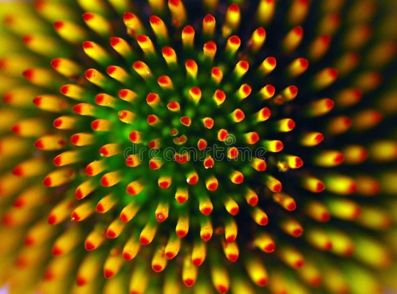 kwiat abstrakcyjne fotografia royalty free
