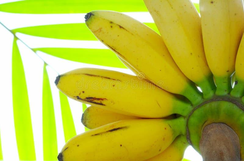 kwiat bananów obrazy stock