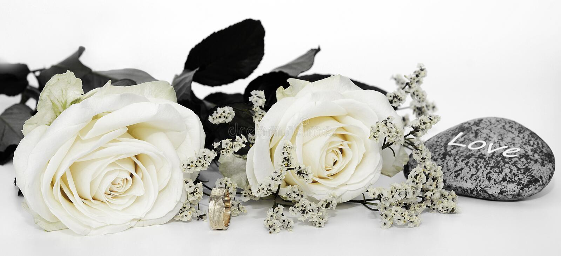 Kwiat, biel, ci?cie kwiaty, kwiatu bukiet