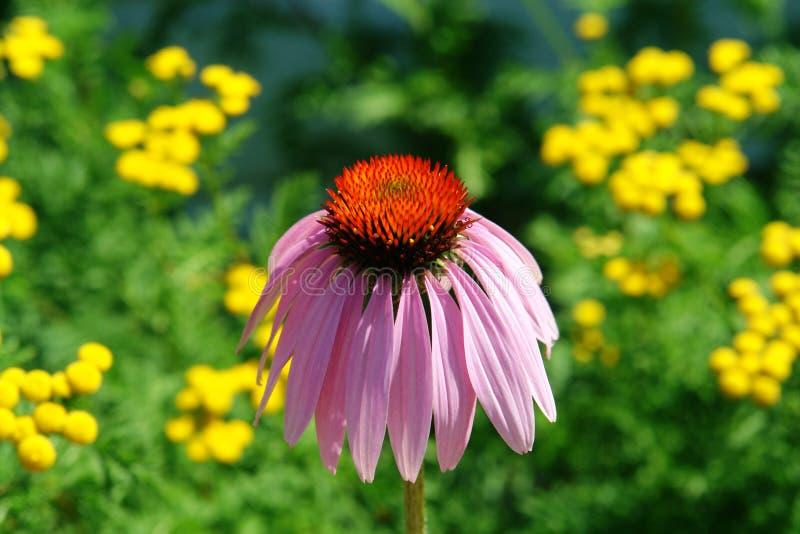 kwiat blednąć zdjęcia stock