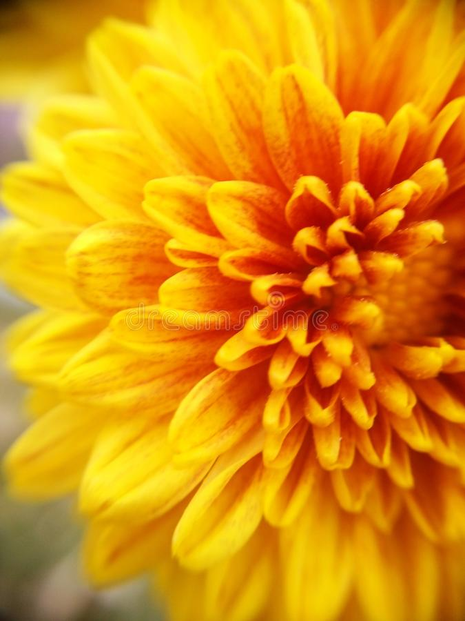 kwiat bright obraz royalty free