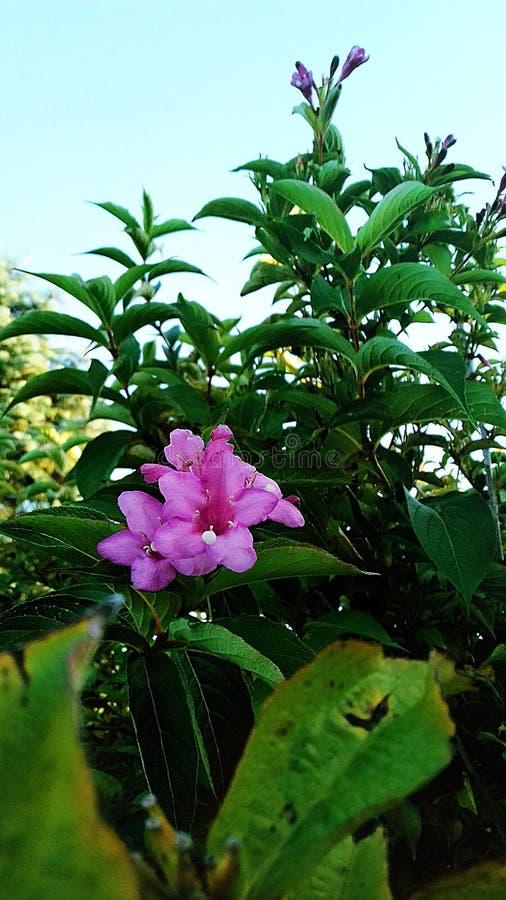 kwiat bright Letni dzień w Sierpniowym niebieskim niebie piękna natury słoneczny dzień obraz stock