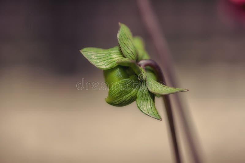 Kwiat być obraz stock