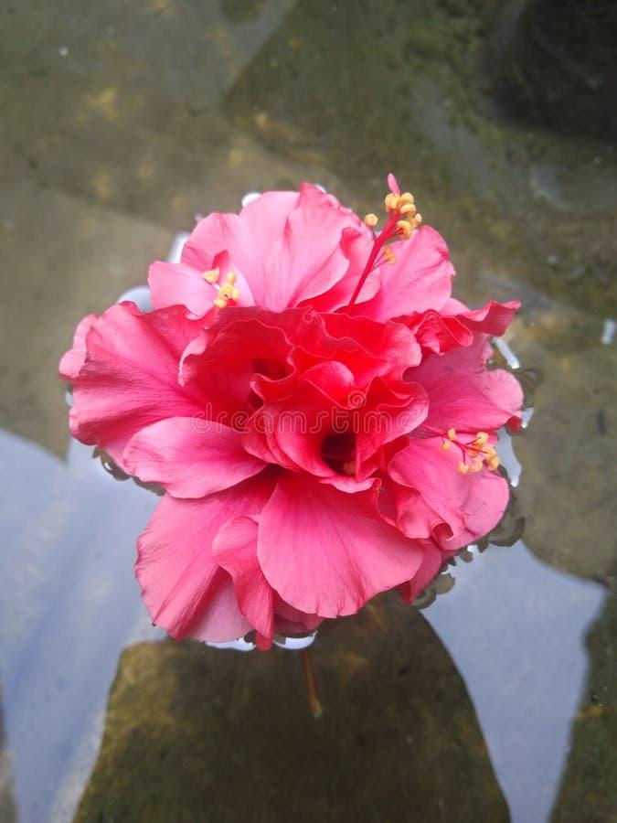 Kwiat chłodno zdjęcia stock