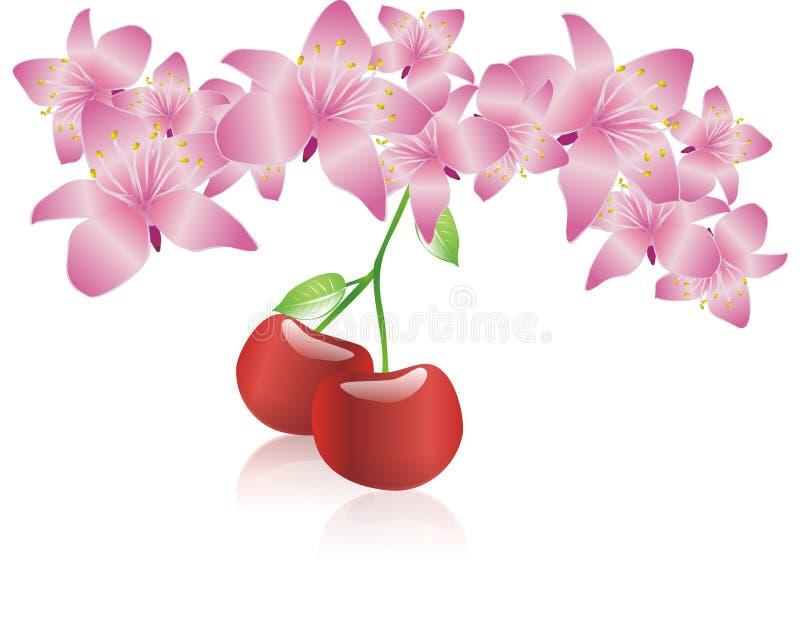 kwiat cherry kwiat royalty ilustracja
