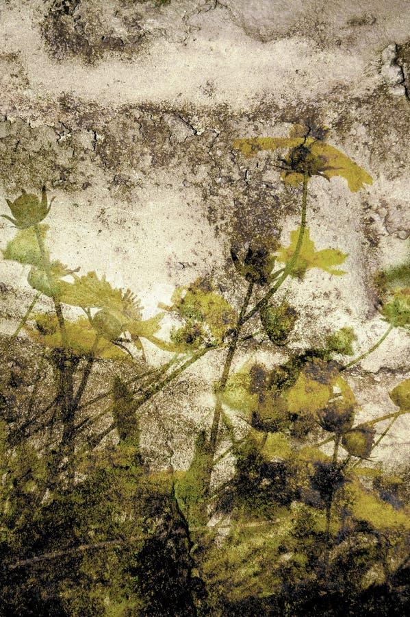 kwiat crunch ilustracja wektor