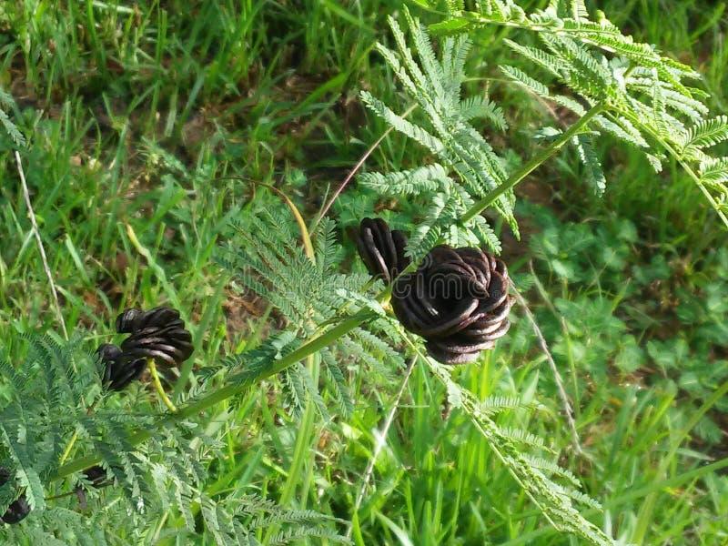 kwiat czarnego fotografia stock