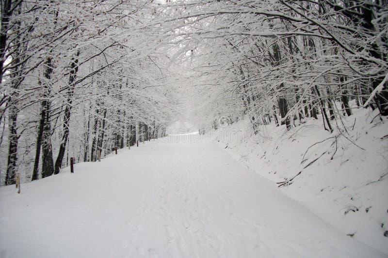 kwiat czasu zimy śniegu obraz royalty free