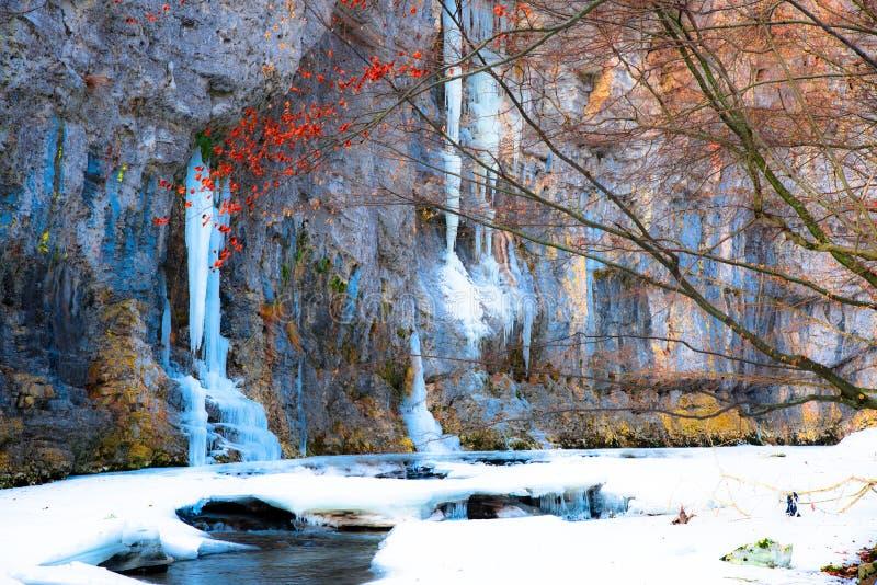 kwiat czasu zimy śniegu zdjęcia royalty free