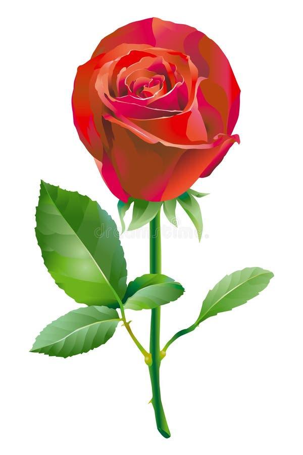 kwiat czerwień wzrastał royalty ilustracja