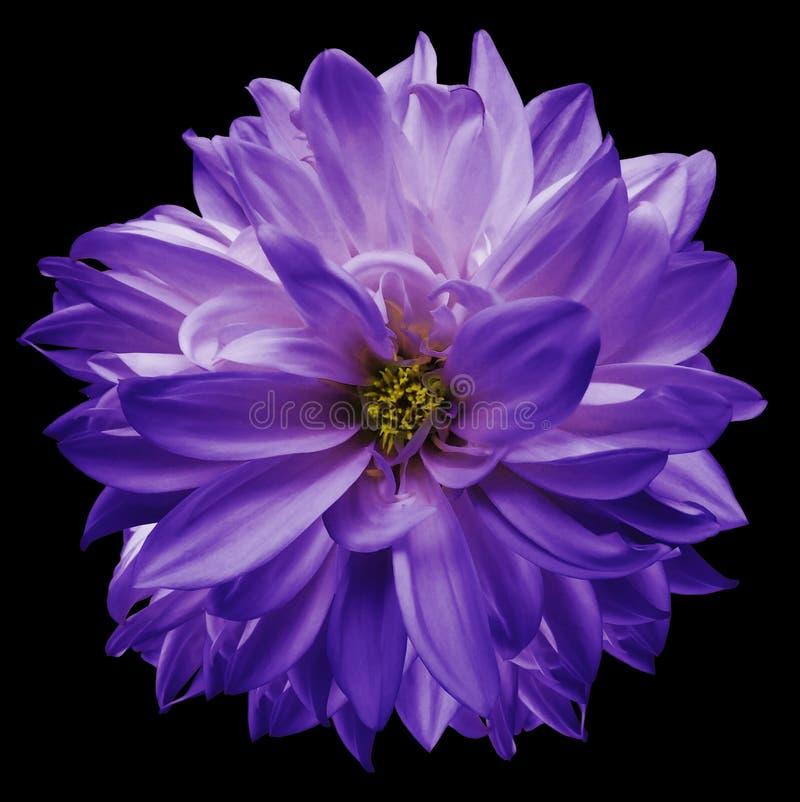 Kwiat dla projekta obraz royalty free