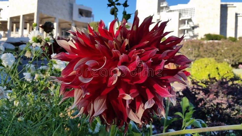 kwiat dosyć obrazy royalty free