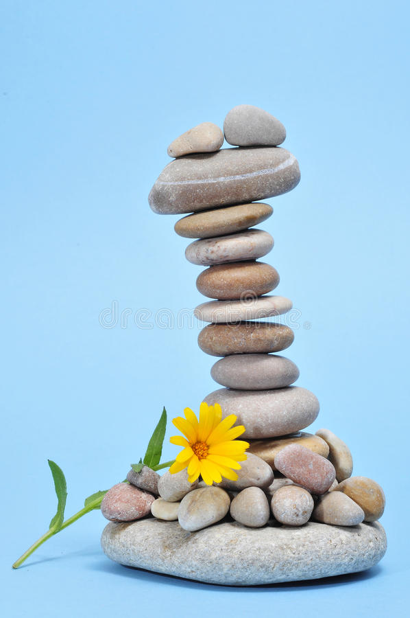 kwiat dryluje zen obrazy royalty free