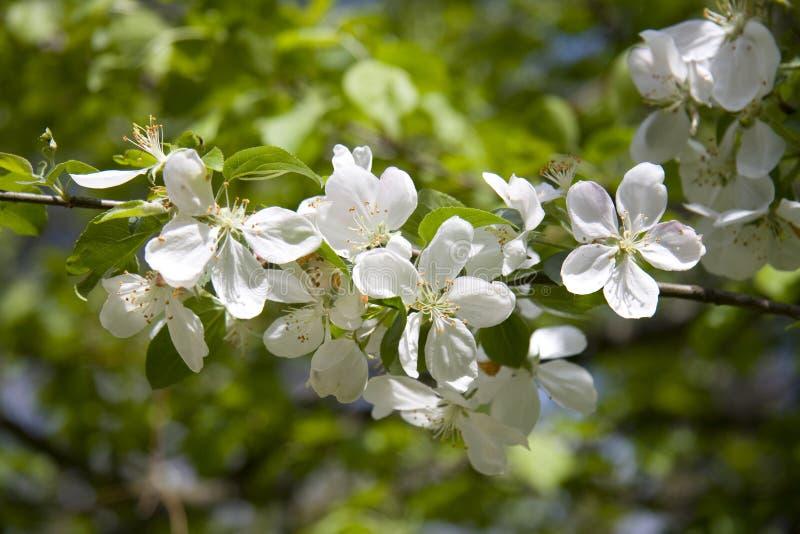 kwiat drzewo obrazy royalty free