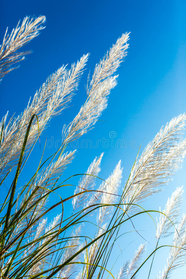 Kwiat dzika trawa w ranku obraz stock