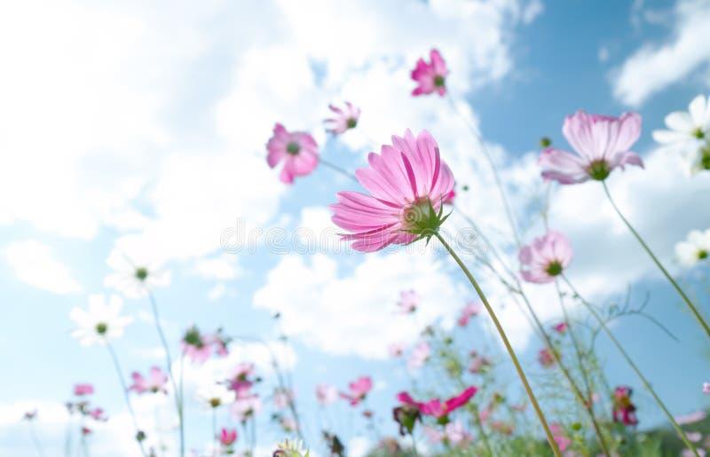 Download Kwiat dziki obraz stock. Obraz złożonej z rolnictwo, świeży - 7540915
