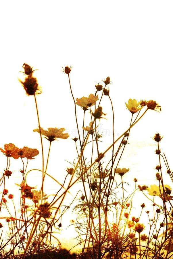 kwiat fasonujący stary obraz royalty free