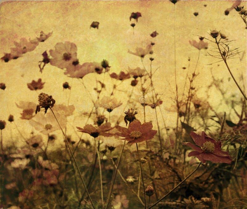 kwiat fasonujący stary ilustracja wektor