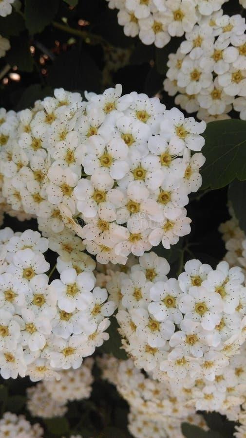 kwiat fractal ramy ilustracja fotografia stock