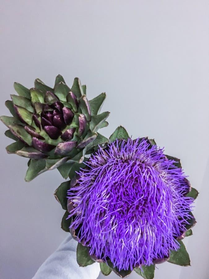 Kwiat głowa karczoch na szarym tle obraz stock