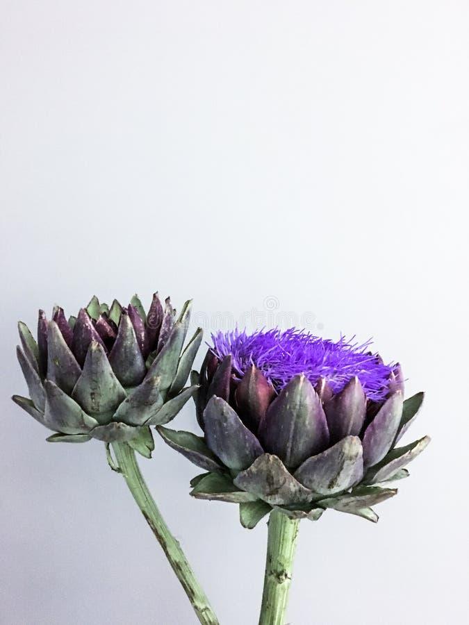 Kwiat głowa karczoch na szarym tle zdjęcie stock