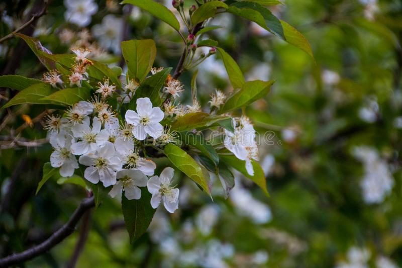 Kwiat góry zdjęcia stock