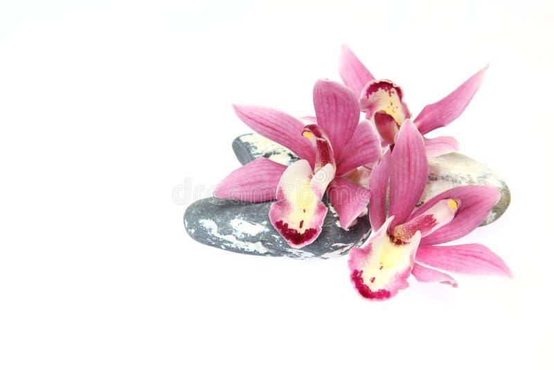 Kwiat głowa cymbidium zdjęcia royalty free