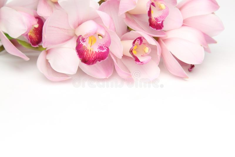 Kwiat g?owa cymbidium w bia?ym tle zdjęcia royalty free