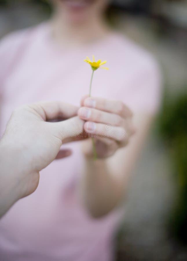 kwiat gospodarstwa zdjęcie stock