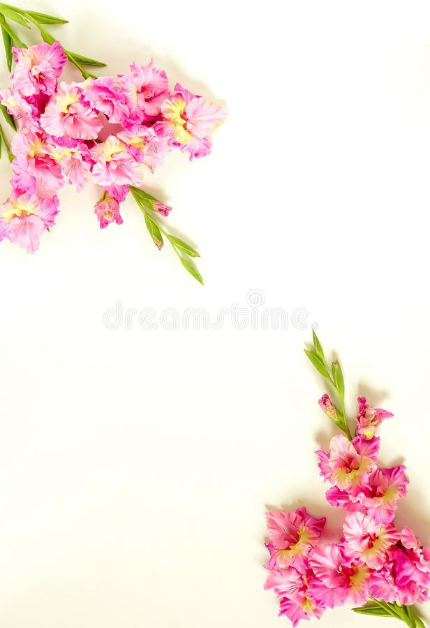 Kwiat granicy rama robi? r zdjęcie royalty free