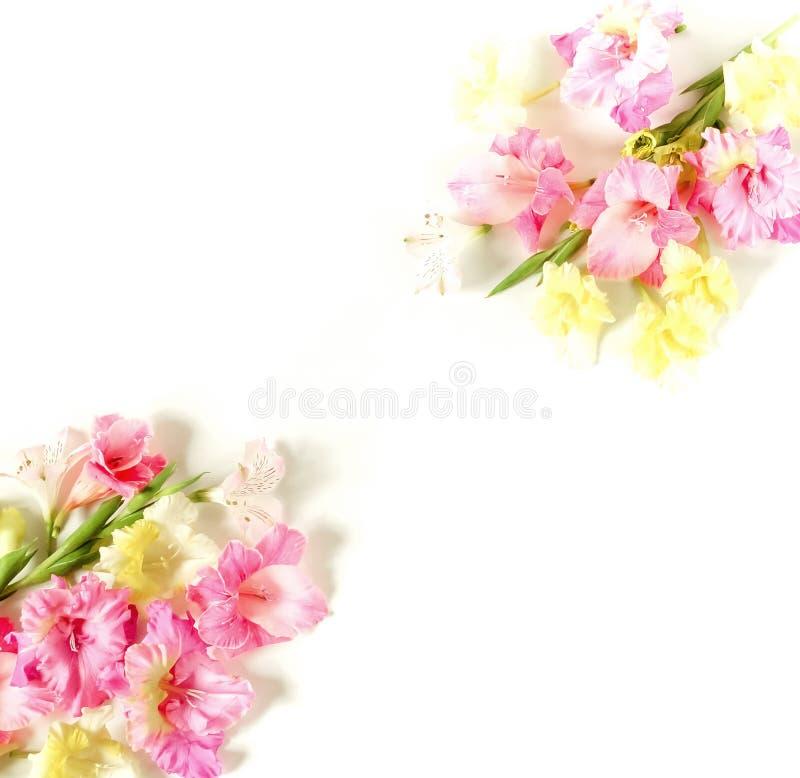 Kwiat granicy rama robi? r obrazy stock