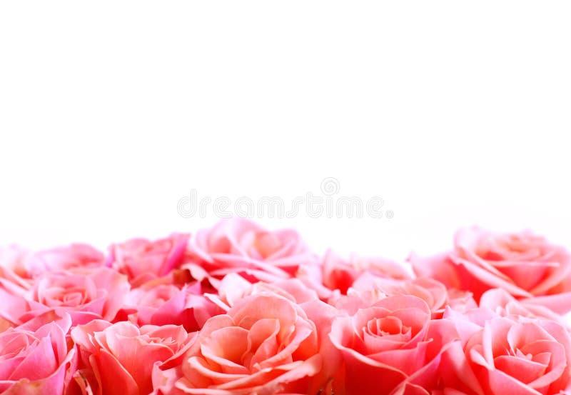 kwiat graniczny zdjęcia royalty free