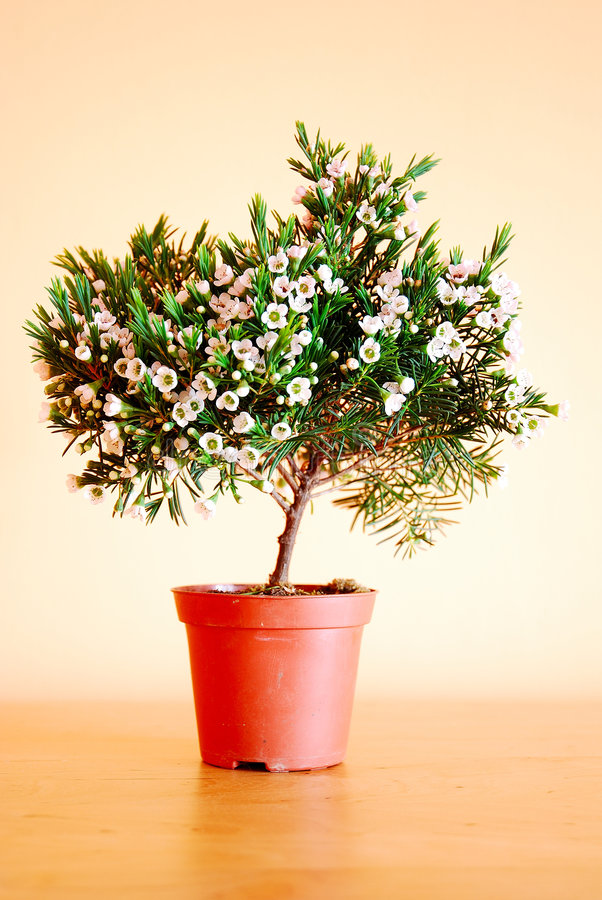 kwiat hdr zdjęcia royalty free