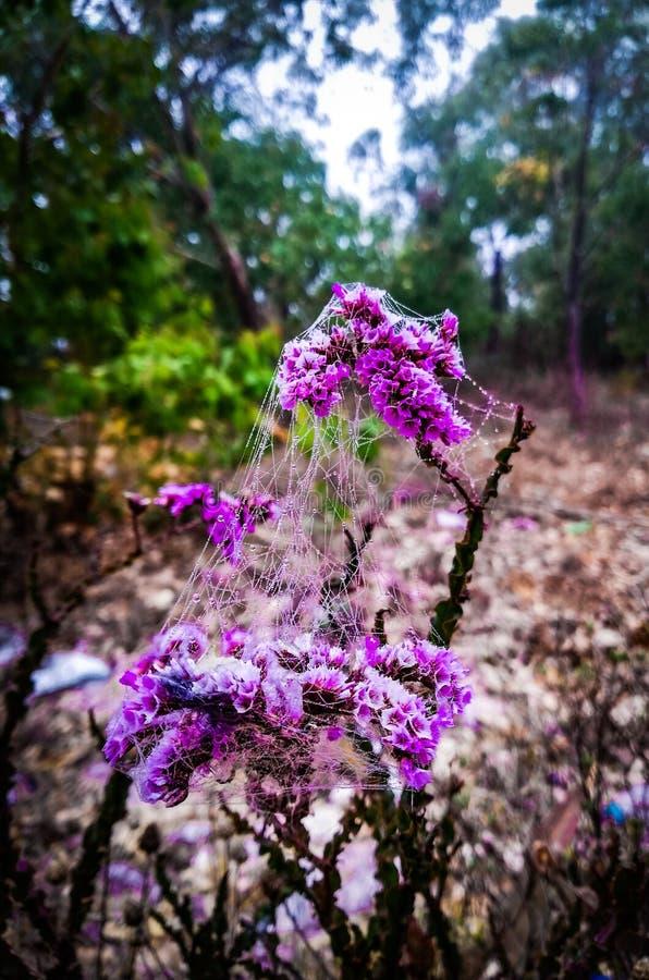 Kwiat i insekt zdjęcia stock