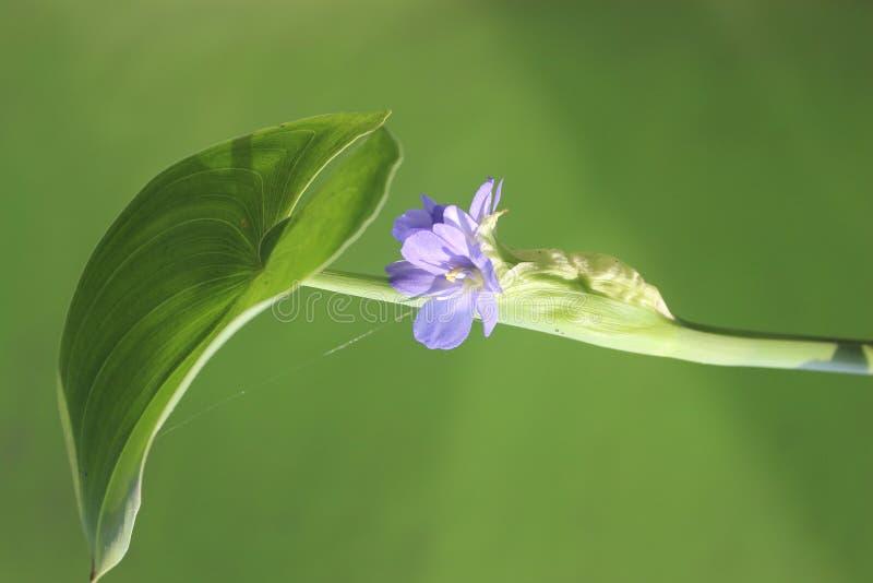 Kwiat i liść obraz stock