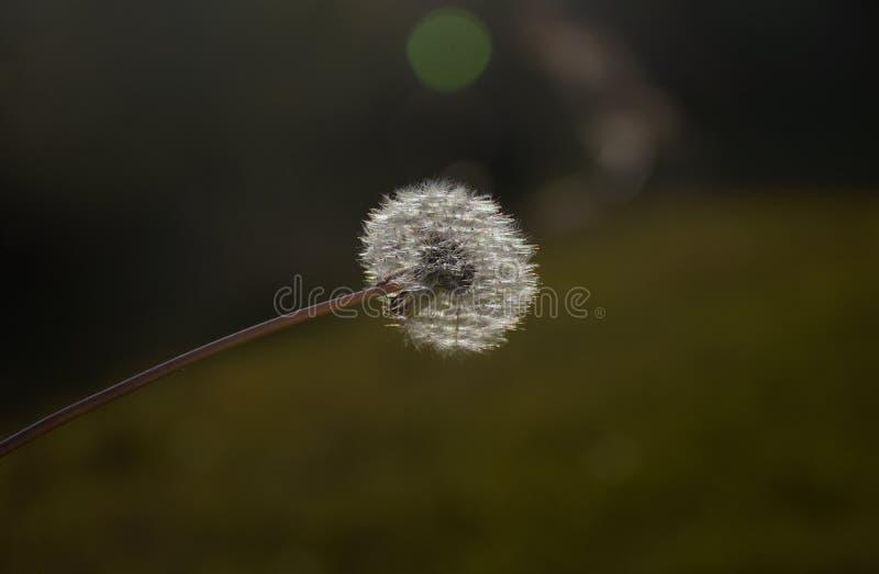 Kwiat i pył zdjęcia stock