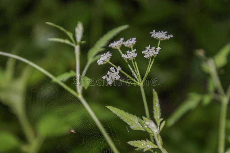 Kwiat i spiderweb fotografia royalty free