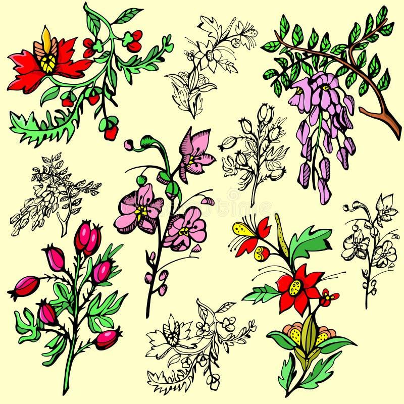kwiat ilustracji serii royalty ilustracja