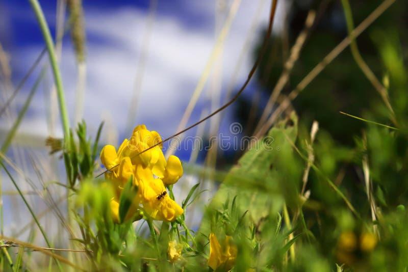 Kwiat, insekt i piękny niebo, zdjęcie royalty free