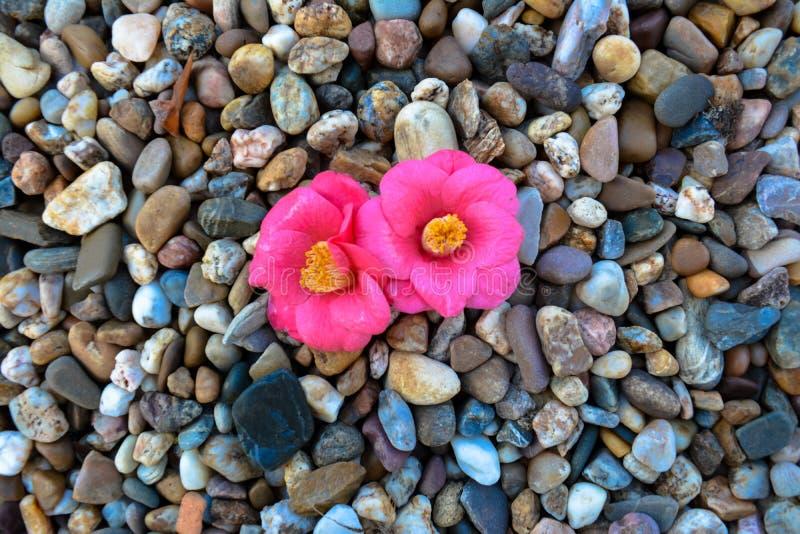 Kwiat intensywny obrazy royalty free